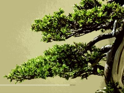 Photo from doomcraft (http://doomcraft.deviantart.com/art/Bonsai-Zen-10380772)